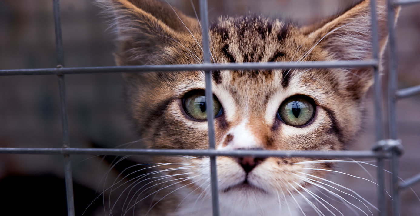 HOME - Forgotten Felines of Sonoma County