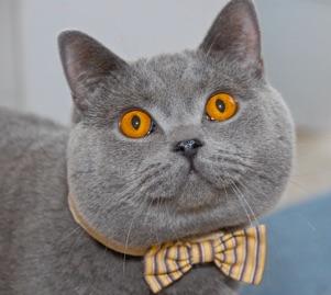 CFA Cat Show 2020
